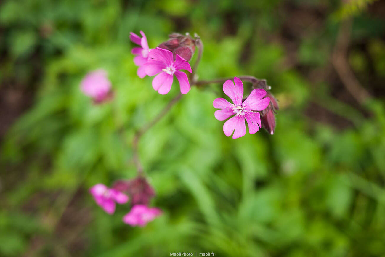 Par ici les petites fleurs