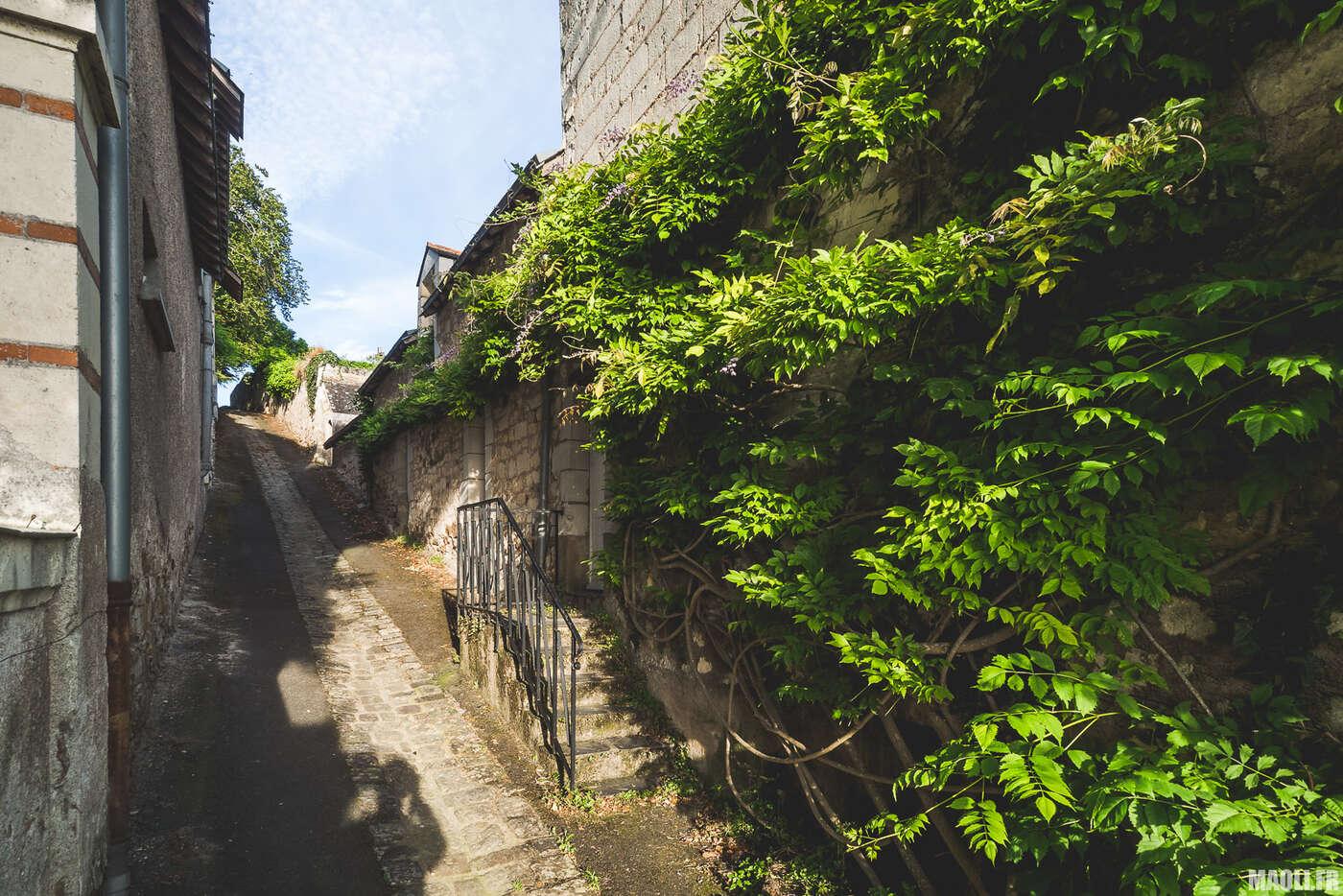 Chemin de Thoureil