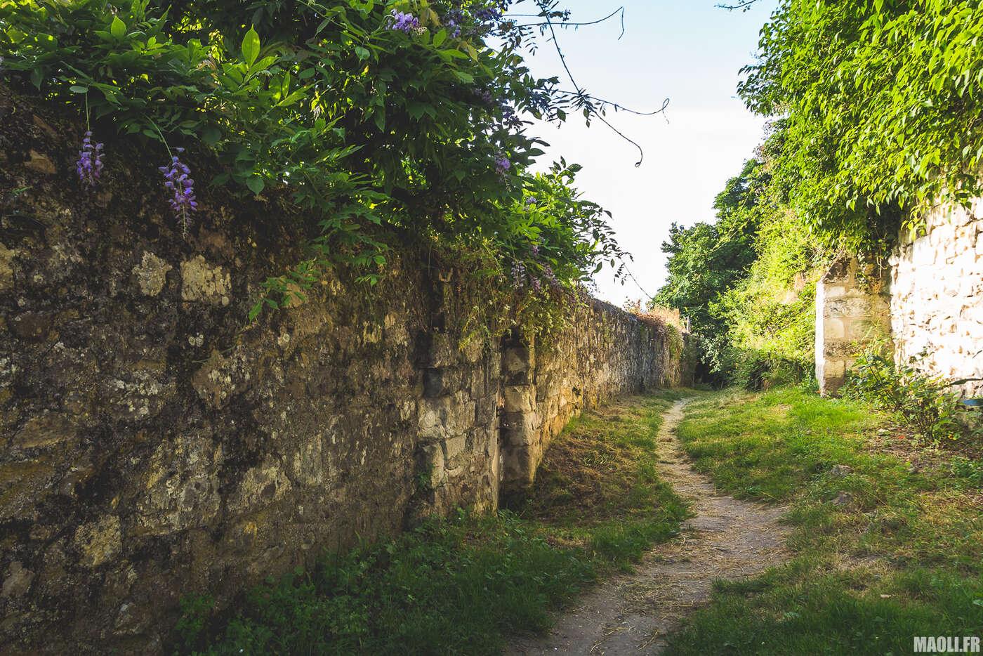 Chemin du Thoureil