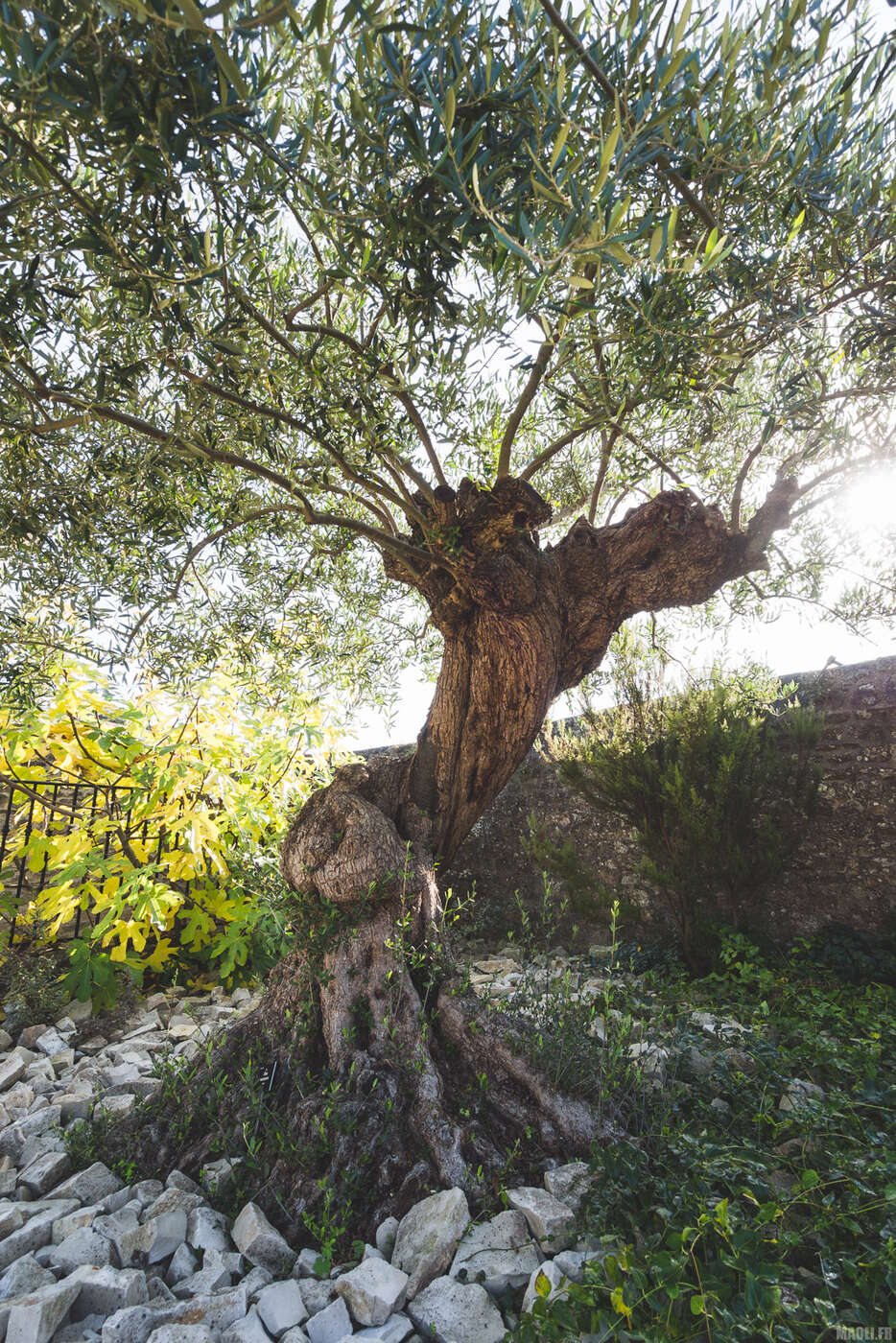 Jardin de la Retraite, Quimper