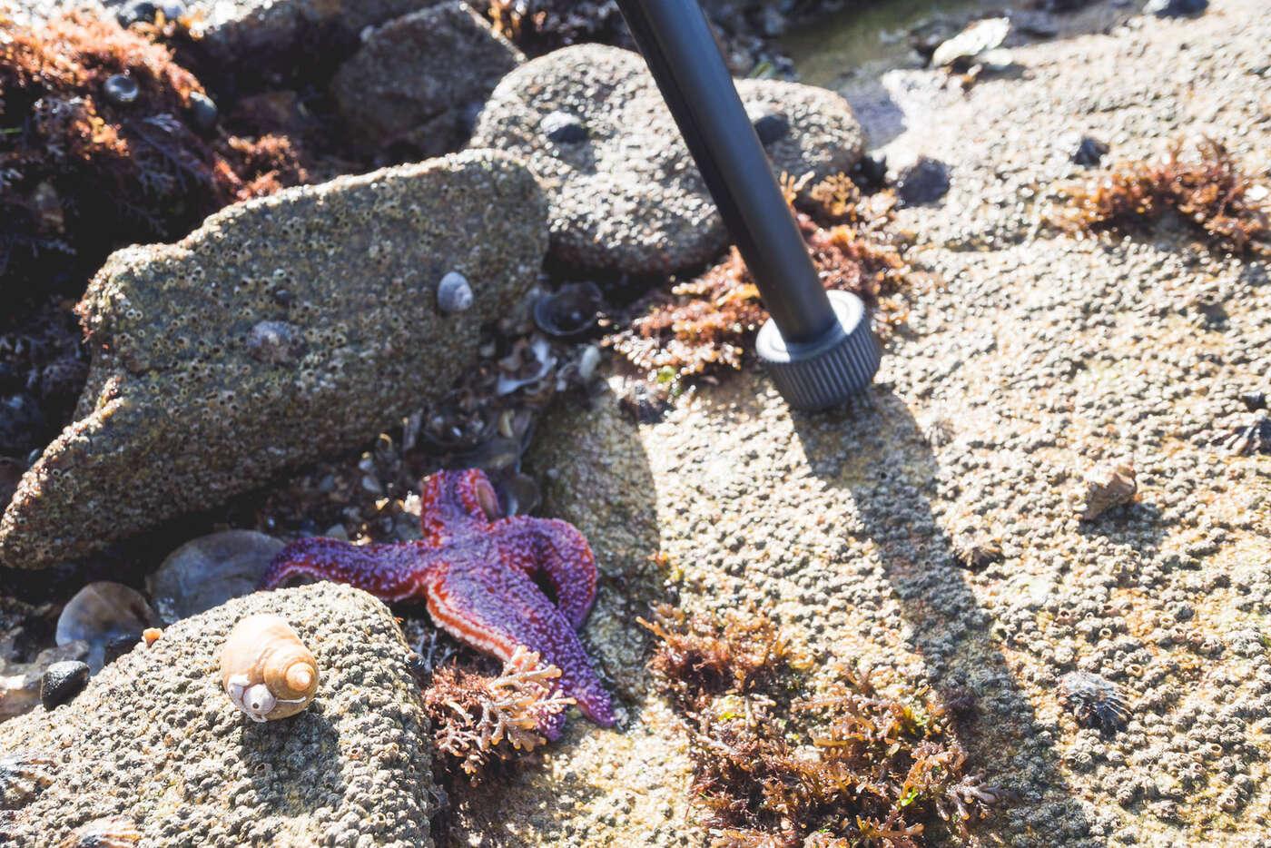 Etoile de mer au pied du trépied