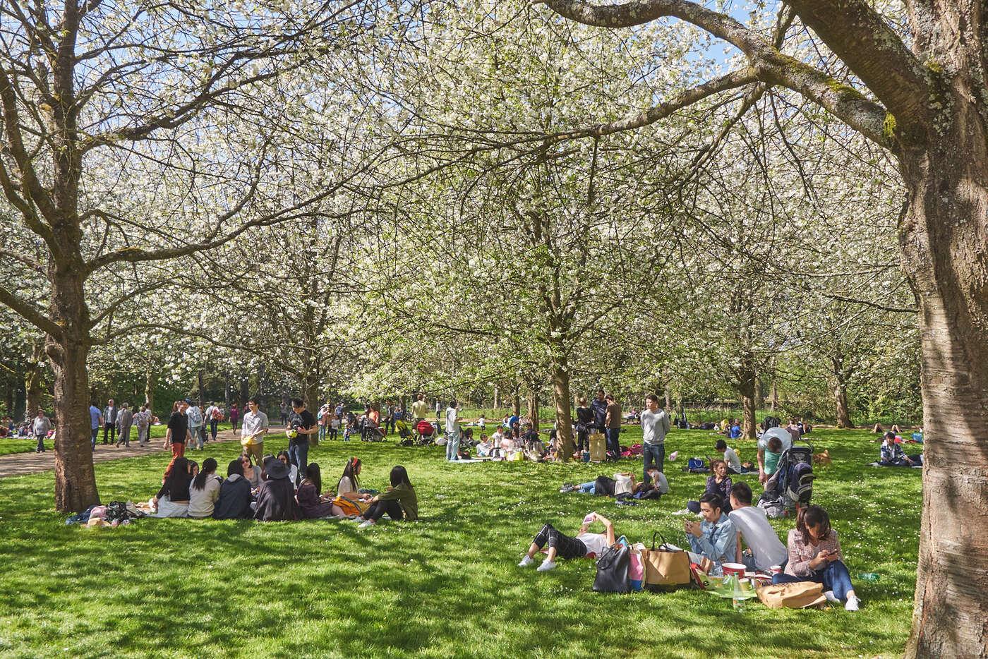 Floraison des cerisiers en le de france french vadrouilleur - Comment passer en floraison ...