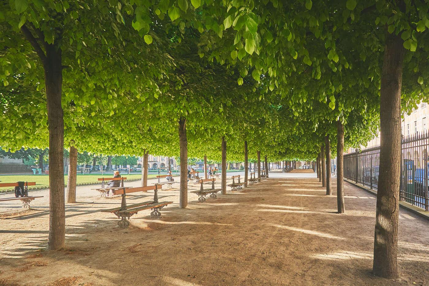 Sous les arbres de la Place des Vosges
