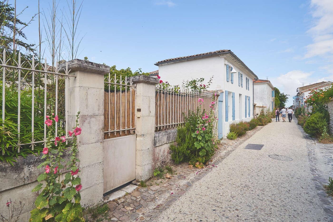 Roses trémières  de Talmont-sur-Gironde