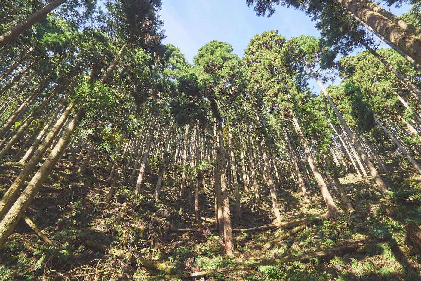 Forêt de Kibune