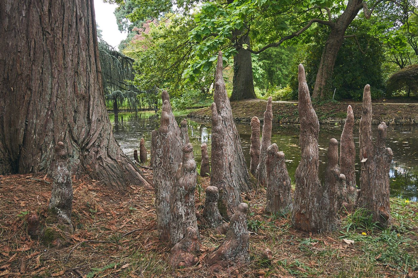 Racines de l'arboretum de la Vallée-aux-loups